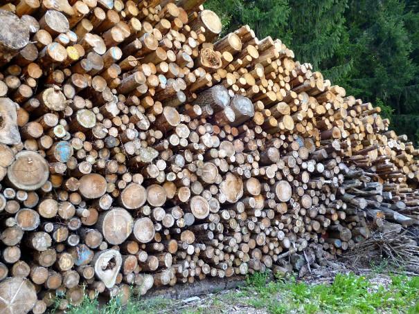 130831_Holz
