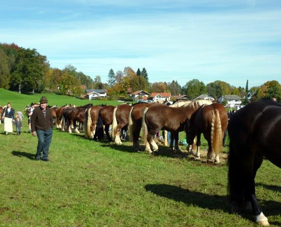 131019_18_Pferdezuchtgenossenschaft