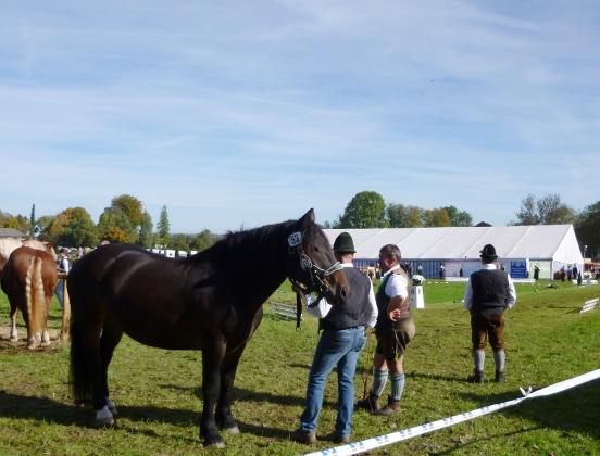 131019_19_Pferdezuchtgenossenschaft