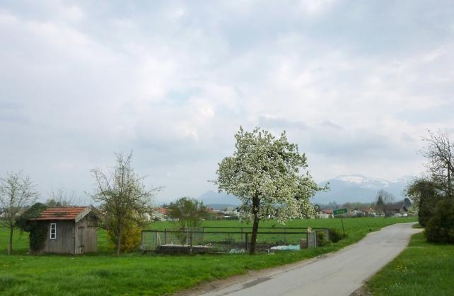 140413_107_Obstweg_Arbing