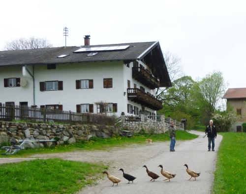 140413_35_Obstweg_Dirnsberg